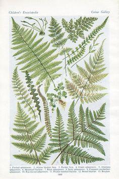 Botanical fern vintage print nature botany by VintageAndNostalgia