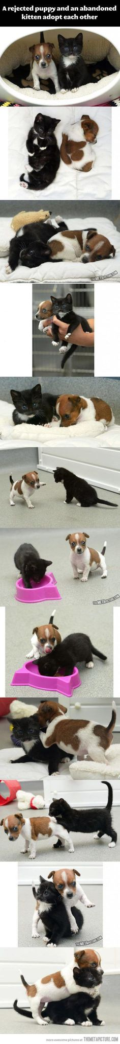 This is adorable... Puppy and Kitten adopt each other