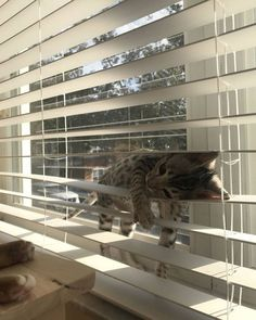 Cute kittens are fun — Tired… Cute Kittens, Cats And Kittens, Ragdoll Kittens, Bengal Cats, Tabby Cats, Siamese Cat, Animals And Pets, Baby Animals, Funny Animals