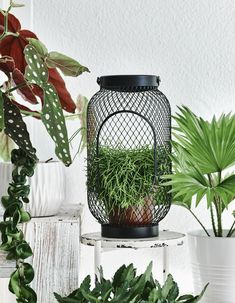 Display ideas from plant expert Miriam - IKEA Hanging Plants Outdoor, Indoor Planters, Hanging Planters, Pot Plante, Cacti And Succulents, Potted Plants, Design Jobs, Decoration Plante, Vertical Gardens