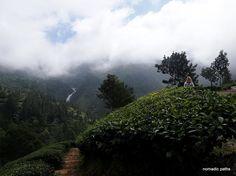 Munnar, Guide Book, Kerala, Paths, Coastal, Road Trip, Tropical, Memories, River