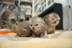 [Suri&Noel cat story] EP31 - 집으로 가자 (Come back home.)