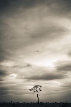 One Tree in Satara