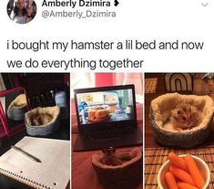 I need a tiny bed for my hamster. I guess I would need a hamster before I get the bed but Cute Animal Memes, Animal Jokes, Funny Animal Pictures, Cute Funny Animals, Funny Cute, Cute Pictures, Hilarious Pictures, Super Funny, Videos Funny