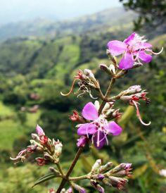 Flor de nonte