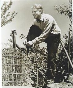 Farm/Orchard Scrapbook: From an original negative, Nelson pausing to tie the laces of his work shoes.- ESCANO COLLECTION