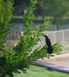#nature in #Sahuarita Bald Eagle, Scene, Bird, Nature, Animals, Naturaleza, Animales, Animaux, Birds
