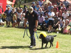 The dogs will be strutting their stuff at the #RandfonteinShow Food and Music Festival on Saturday, 2 March 2013