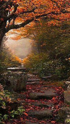 Autumn pathway source Flickr.com