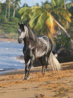 horse beach puerto rico | El Oculto de La Serrania on the beach in Luquillo, Puerto Rico