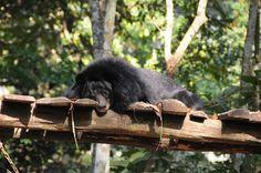 Le petit ours d'Asie est une espèce protégée ©Salaün Holidays