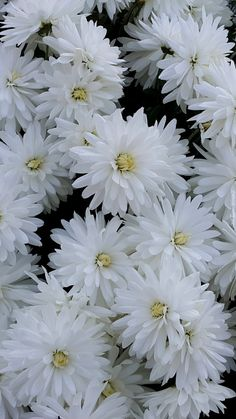 Aesthetic Pastel Wallpaper, Screen Wallpaper, Art Girl, White Flowers, Wallpapers, Akita, Flower Power, Nature, Iphone