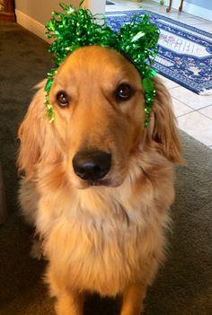 Happy St Patricks Day ! Rusty