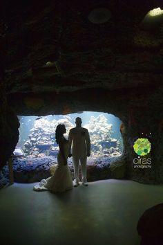Virginia Aquarium wedding [Virginia Beach wedding!]