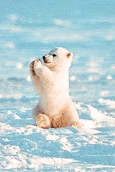 Cute Wild Animals, Baby Animals Super Cute, Cute Baby Dogs, Baby Animals Pictures, Cute Little Puppies, Cute Dogs And Puppies, Cute Little Animals, Cute Animal Pictures, Cute Funny Animals