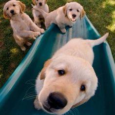 Puppy selfie
