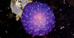 Científicos encuentran una misteriosa esfera púrpura que brilla intensamente en el fondo del océano