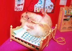 hamster eating noodle