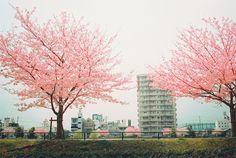 Untitled (by tsugu tsugu)