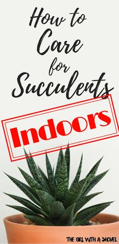 Succulent Care Discover Do you struggle with succulents? Learn how to keep them alive and healthy! Are you struggling with your succulents? Check out these tips for taking care of succulents and know what you need to have happy thriving plants! Indoor Succulent Planter, Indoor Cactus, Succulent Landscaping, Succulent Care, Indoor Succulents, Succulent Plants, Cacti Garden, Succulent Gardening, Succulent Terrarium