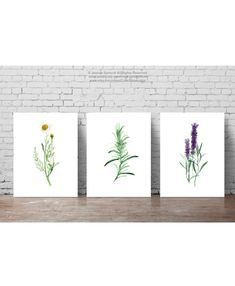 Herbs Set of 3 Art Prints, Camomile Wall Decor, Rosemary Watercolor Painting, Purple Lavender Home Garden, Foodart Wall Hanging