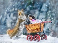 One of the Squirrels pushes a pram with a little baby squirrel doll inside in one of Nancy Rose's hilarious photographs