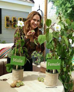 How to Grow Kiwi From Store Bought Kiwi Fruit!