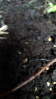 opdracht structuur #2 natuurlijke structuur grond