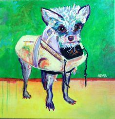 Raincoat Dog. NYC