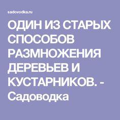ОДИН ИЗ СТАРЫХ СПОСОБОВ РАЗМНОЖЕНИЯ ДЕРЕВЬЕВ И КУСТАРНИКОВ. - Садоводка