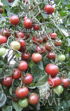 Fruit, Vegetables, Cherry, Food, Black, Black People, Essen, Vegetable Recipes, Meals