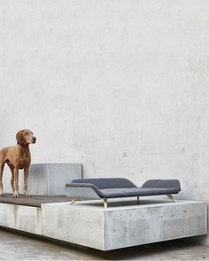 The Letto Dog Bed provides world class contemporary style and uber comfort for your furry friend. The minimalist Letto day bed combines simple lines, a modern design, and is built with exceptional materials. The body of the bed is made from bent alum Outdoor Daybed, Outdoor Dog, Canapé Design, Modern Design, Pet Beds, Dog Bed, Blue Jay Way, Wooden Kayak, Painting Studio