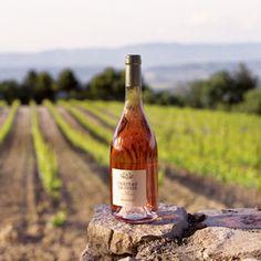 Les vins du Château La Coste. #sun #seasnowsun #tourisme #tourism #france #pacatourism #pacatourisme #PACA #provencal #tourismpaca #tourismepaca #vin #wine #oenotourisme #vitivinicole #vigne #raisins #grapes #vineyards #cave #chateau #coste #lacoste