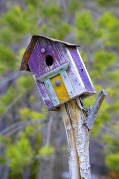 Old Wooden, Purple Bird House~Love the Character~❥ Purple Bird, Purple Garden, Purple Haze, Purple Yellow, Wooden Bird Houses, Bird Boxes, Bird Feathers, Beautiful Birds, Decoration