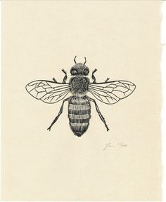 Honey Bee (edition/400), 8 x 10 / $20 (printed on handmade Japanese kozo paper)