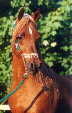 Horse / Wish Me Luck - Stallion Breeding Auction: In Aid of Breast Cancer Research