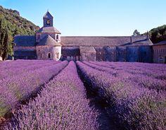 tumbleupontheworld:    Provence, France