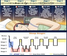 stages of sleep infographic - Google Search