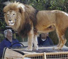Werribee Open Range Zoo in Victoria