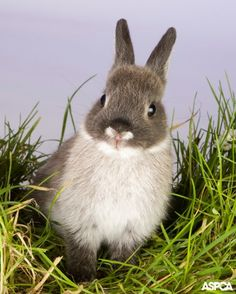 Thinking about getting a real-life Easter bunny?  Consider these five facts before bringing a rabbit home: http://www.aspca.org/pet-care/small-pet-care/rabbits-easter-gifts
