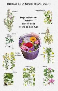 Magick Book, Witchcraft, Wicca Recipes, Baby Witch, Practical Magic, Sabbats, Bullet Journal Ideas Pages, Botany, Flower Power