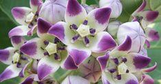 ¡¡Esta planta medicinal es impresionantemente bella!!