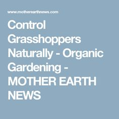 Control Grasshoppers Naturally - Organic Gardening - MOTHER EARTH NEWS