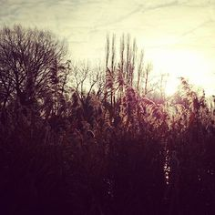 """This morning in Weesp :) Hello sunshine!  #beautiful #nature #photography #weesp #hannighan #sun #sunshine #goodmorning"""
