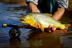 Pesca esportiva no Brasil: Pantanal