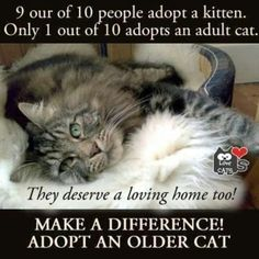 Adopt and older cat!