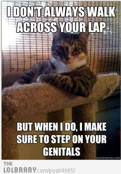 Too true... Bad Kitty!!