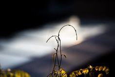 Die Natur entblättert sich vor unseren Augen und das Licht geizt nicht mit seiner Vollkommenheit | Merna El-Mohasel Shades, Eyes, Nature