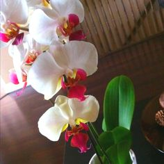 Orchid... I need help making them bloom