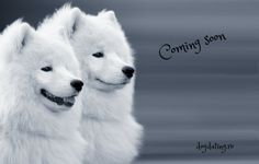 www.dogdating.ro
